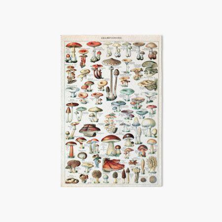 Adolphe Millot - Champignons pour tous - French vintage poster Art Board Print
