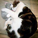 Jasper and Teddy by Angela Harburn