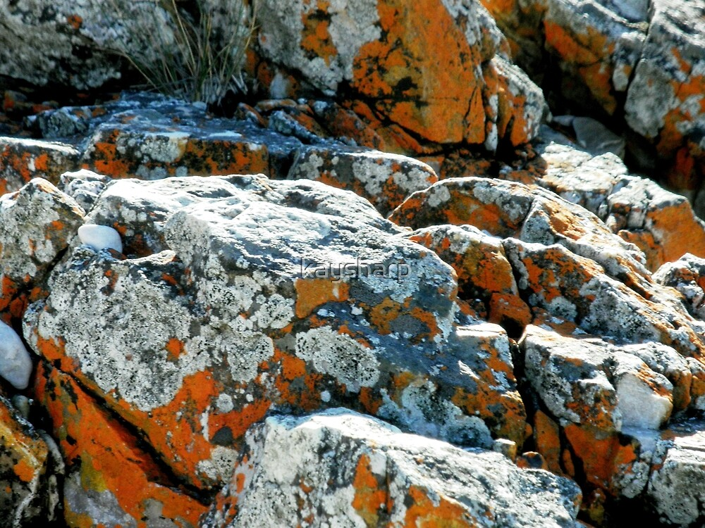 Colouful Rocks at Rocky Cape National Park, Tasmania, Australia. by kaysharp