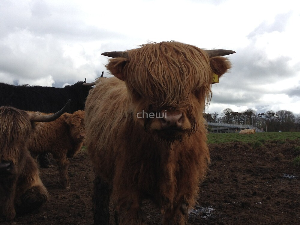 Highland Cow 3 by chewi