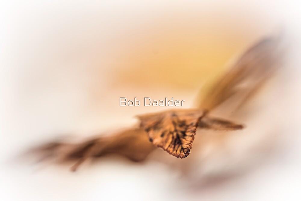 Autumn flies... by Bob Daalder