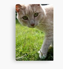 Sirius Cat Canvas Print