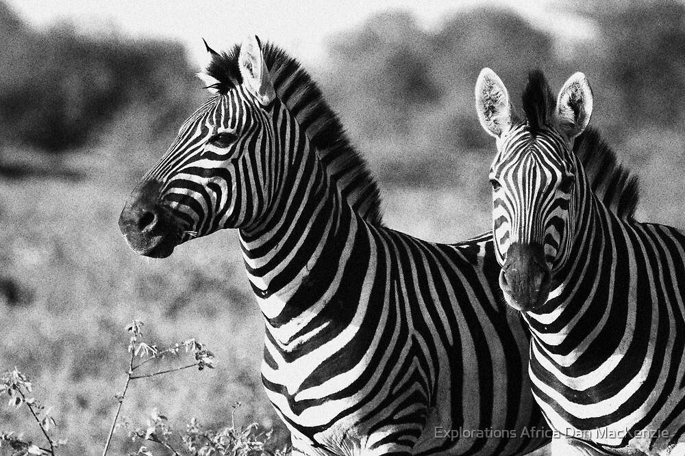 Black and white by Explorations Africa Dan MacKenzie