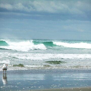 Seagull at Maunganui Beach by jlv-