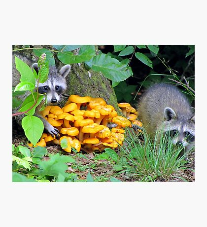 """""""Let's pinch some Witchy Orange Delights"""" Photographic Print"""