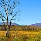 Virginia Back Road by Fred Moskey