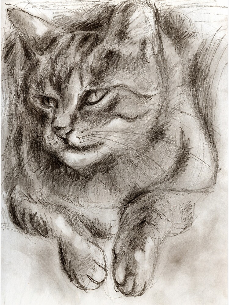 Cat Drawing by hilo