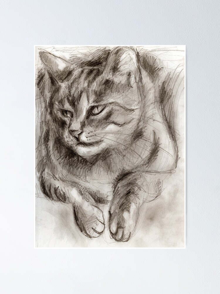 Alternate view of Cat Drawing Poster