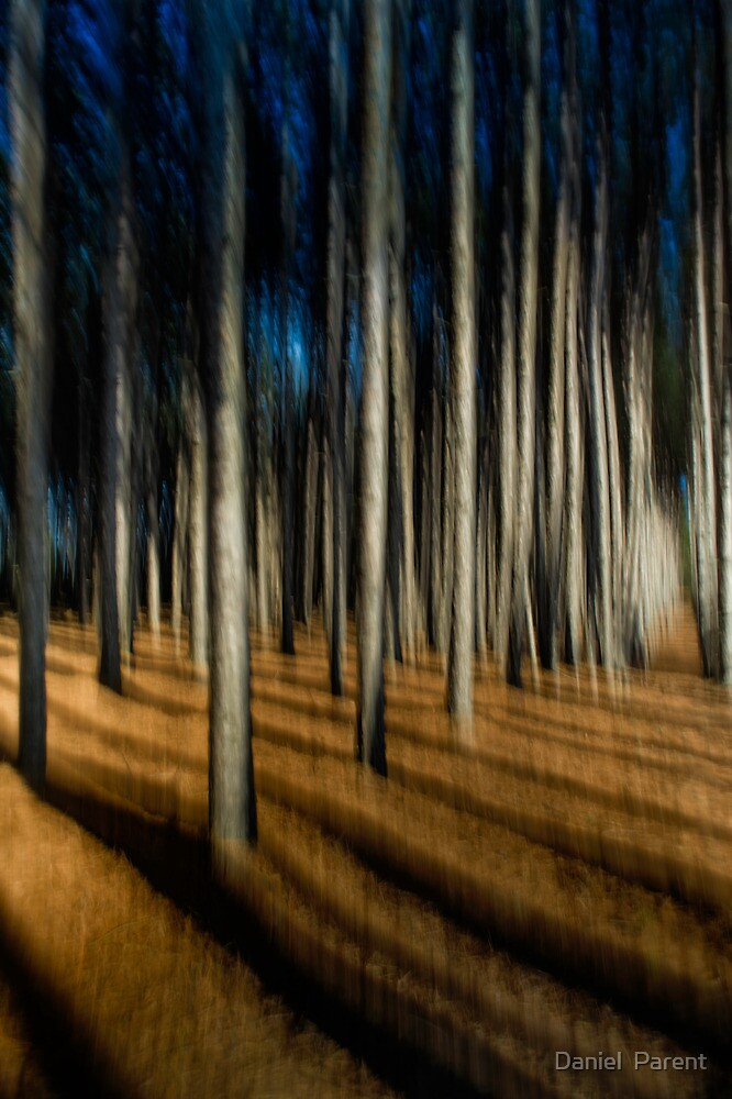Following a path by Daniel  Parent