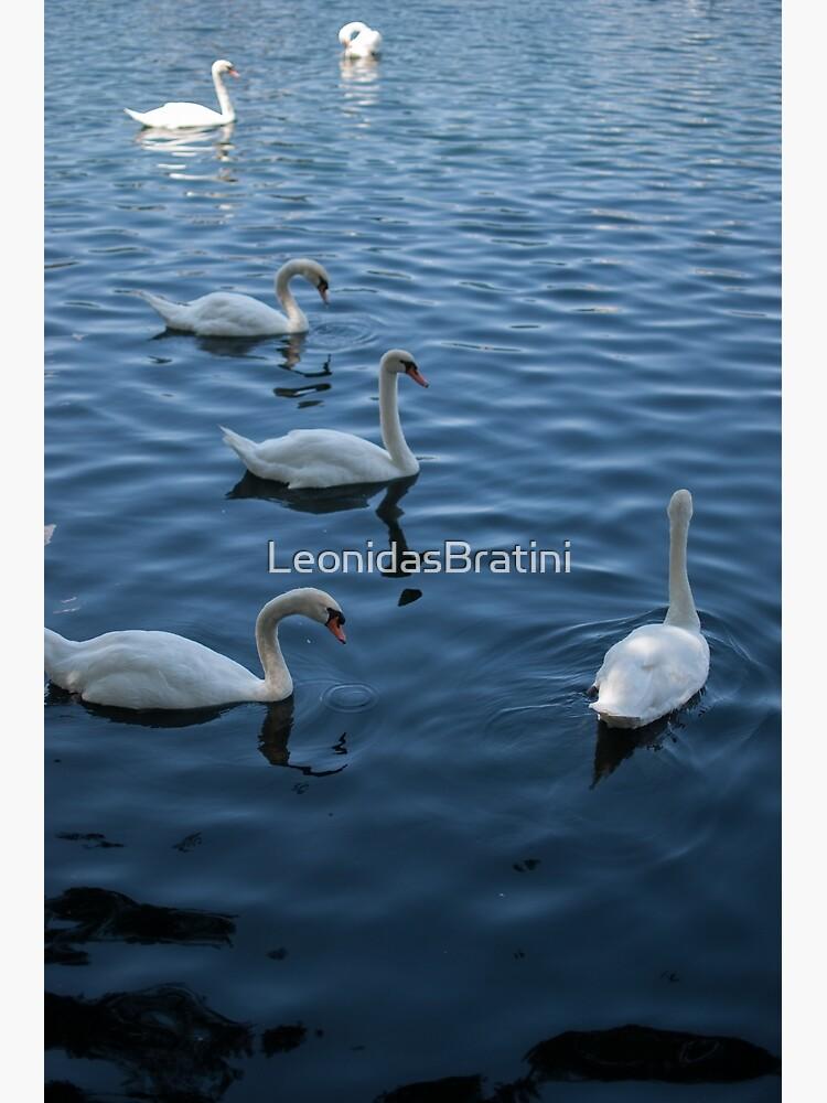 Swan Family at Th Lake  by LeonidasBratini