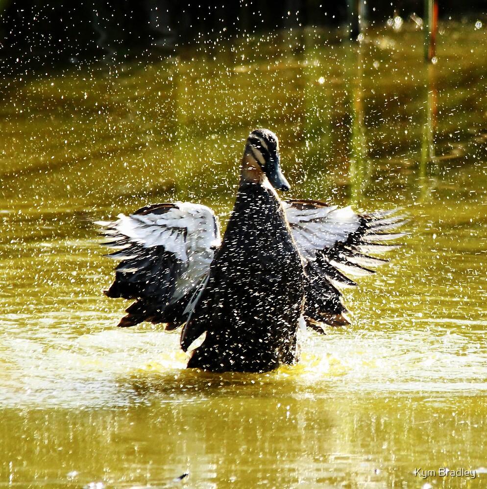 Applaud me please  ~ duck~ by Kym Bradley