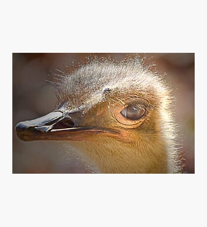 Ostridge Close Up Photographic Print