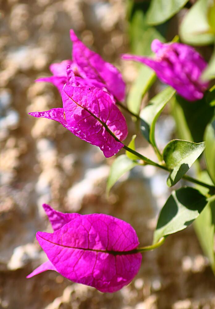 """""""The colour purple"""" by Paul Pasco"""