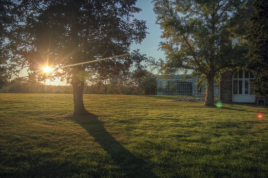 Campus Sunflare by Aaron Campbell