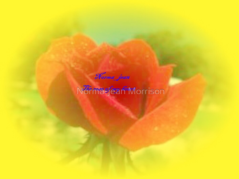 Rose of Light by Norma-jean Morrison