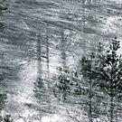 30.11.2012: Blizzard in the Forest by Petri Volanen