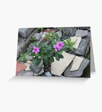 Philippine flowers Greeting Card