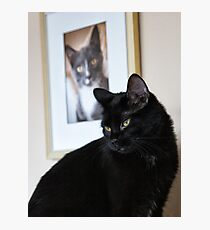 Cat Picture Photographic Print