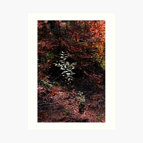 Autumn in the Pines Art Print