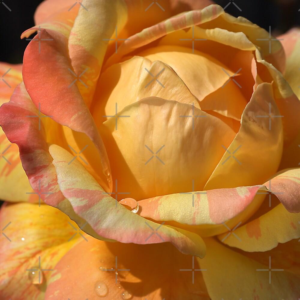 Resting on my Petals by Joy Watson