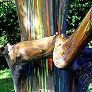 Rainbow Eucalyptus Maui by NealStudios