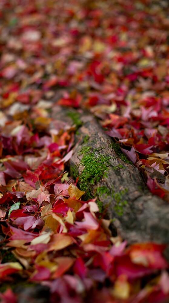 Petal Carpet by Sam Ryan