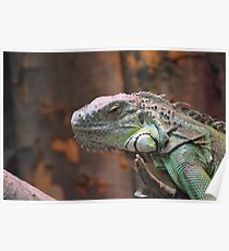 Beautiful peaceful Iguana Lizard sitting on a tree. Poster