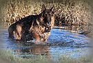 Doggy  Paddle by naturelover