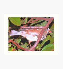 Bird way up on a limb Art Print