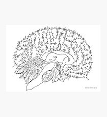 Enchanted forest brain Photographic Print