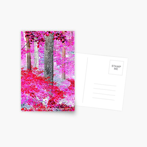 Red Forest Postcard