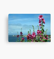 Beautiful pink flowers by the river estuary, Le Conquet, Brittany, France Canvas Print