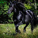 Merens Stallion by Sue Ratcliffe