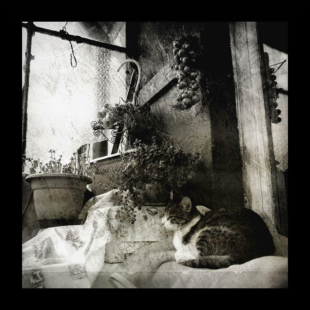 Cat on a Balcony by domiketu