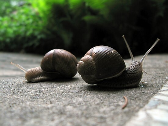 Snails by Cow41087