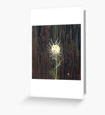 Lacy Seed Pod Greeting Card