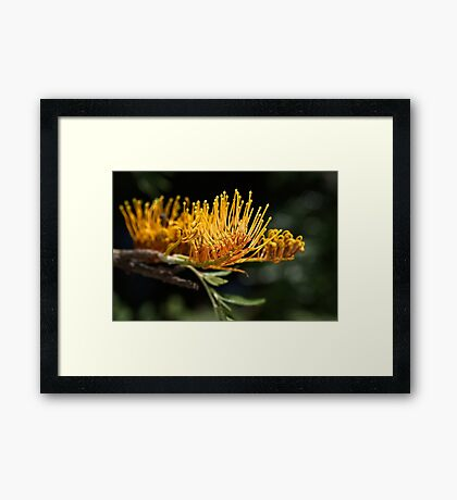 Tree Grevillea Framed Print