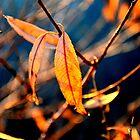 A Single Leaf by Jake Kauffman