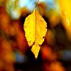 A Single Leaf #2 by Jake Kauffman