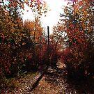 Fall Through by JerryCordeiro