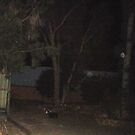 Orbs in the backyard. by slater11