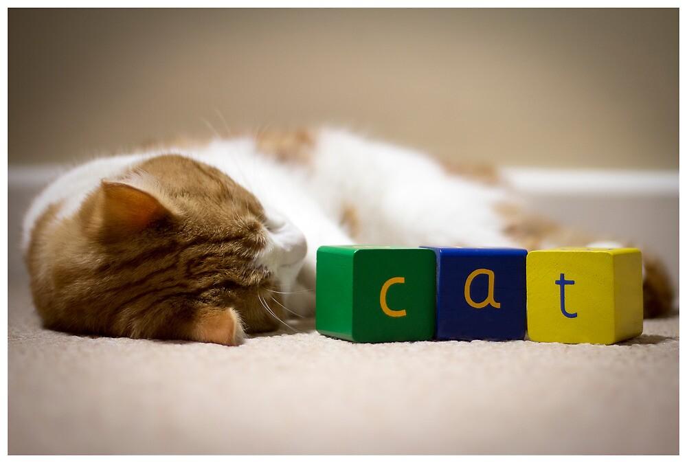 Cat by David Wellbelove