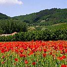 Field of Poppies by Karen Havenaar