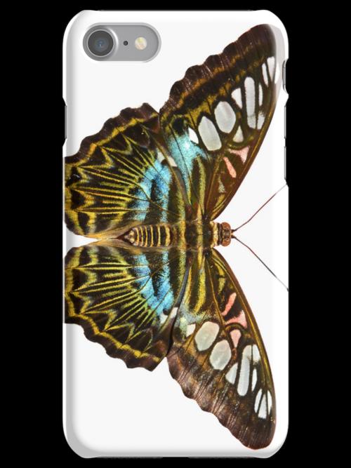 Clipper Butterfly by neil harrison