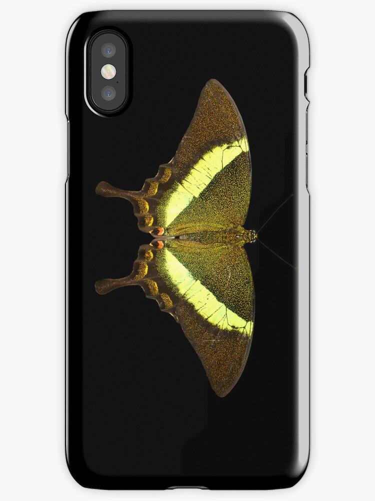 Emerald Swallowtail by neil harrison