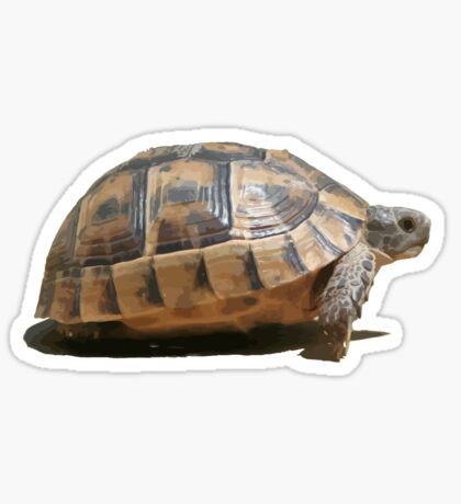 Sideview of A Walking Turkish Tortoise Isolated Sticker