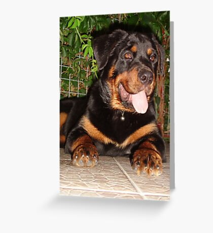 Beautiful Adolescent Female Rottweiler In Garden Greeting Card