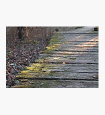 Mossy Boardwalk at Sunset  Photographic Print