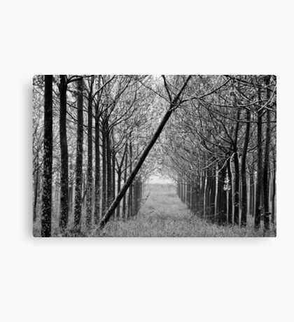 arranged -one Canvas Print