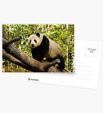 Panda! Postkarten